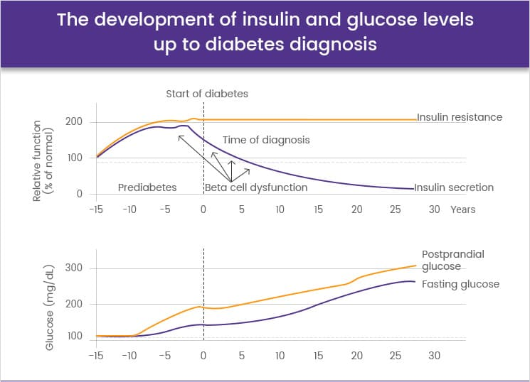 The development of insulin and glucose levels up to diabetes diagnosis