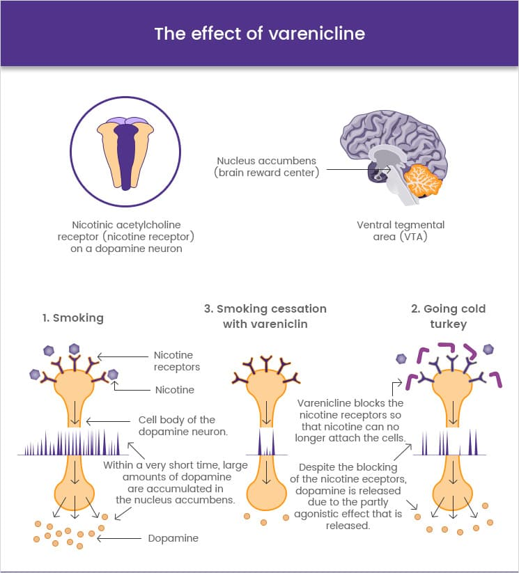 The effect of varenicline