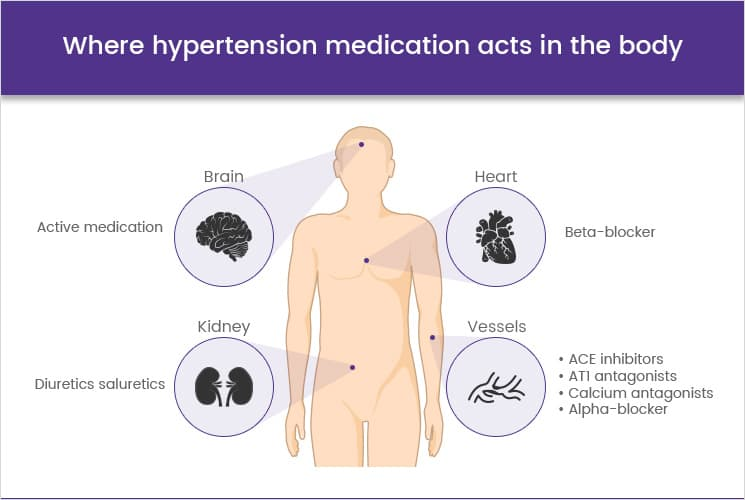 Where antihypertensives act in the body